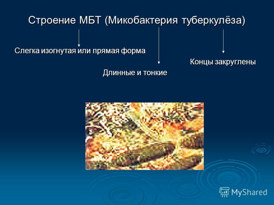 Строение МБТ (Микобактерия туберкулёза) Слегка изогнутая или прямая форма Концы закруглены Длинные и тонкие