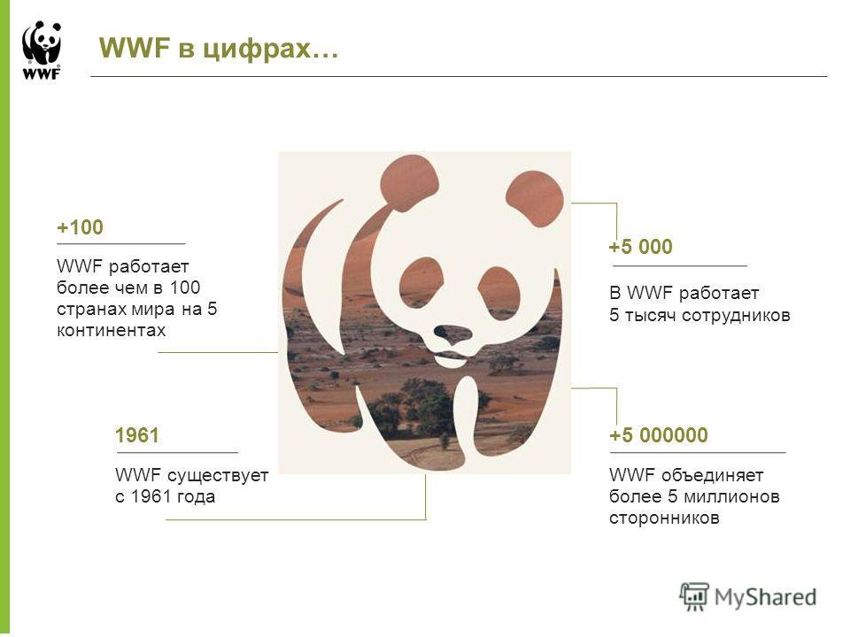 WWF в цифрах… WWF работает более чем в 100 странах мира на 5 континентах +100 1961 В WWF работает 5 тысяч сотрудников +5 000 WWF объединяет более 5 миллионов сторонников +5 000000 WWF существует с 1961 года