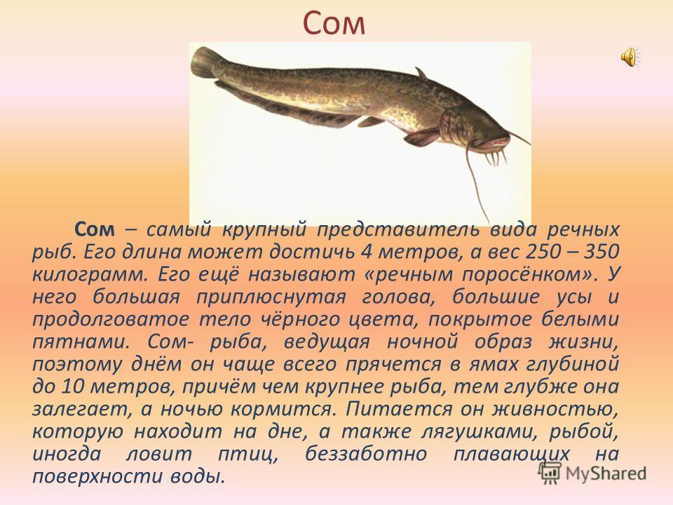 В мире животных 1) 9999 9999 9 -3,5+1,5 -3 +4,7-7,2 Щука – 4,3 Налим –1 Сом – 1,5 9