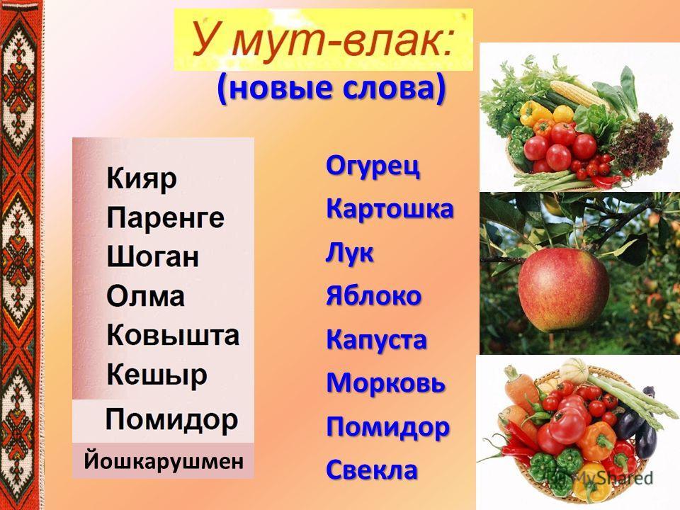 ОгурецКартошкаЛукЯблокоКапустаМорковьПомидорСвекла Йошкарушмен