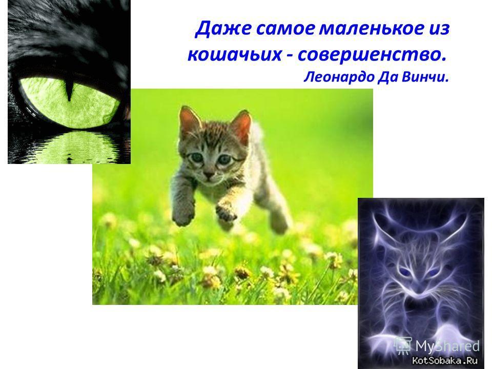 Даже самое маленькое из кошачьих - совершенство. Леонардо Да Винчи.