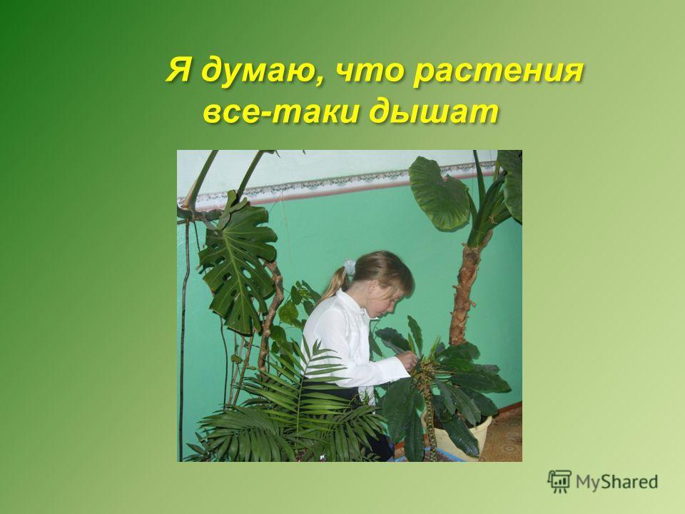 Я думаю, что растения все-таки дышат Я думаю, что растения все-таки дышат