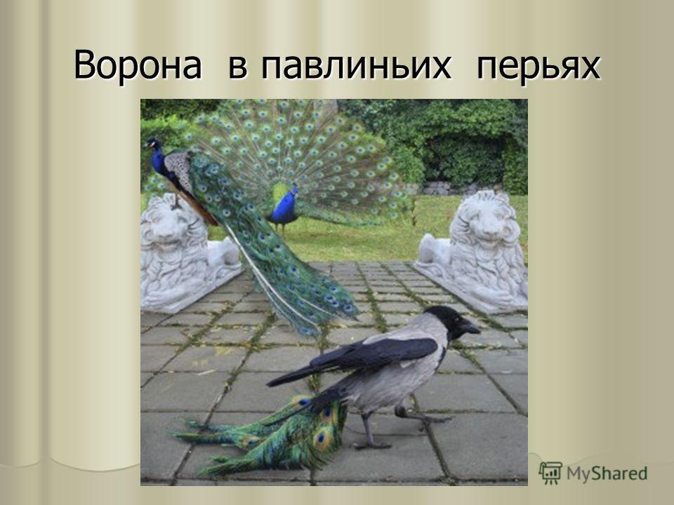 Ворона в павлиньих перьях