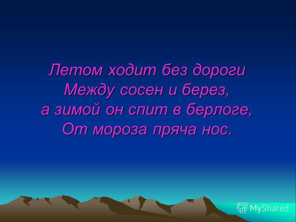 Летом ходит без дороги Между сосен и берез, а зимой он спит в берлоге, От мороза пряча нос.