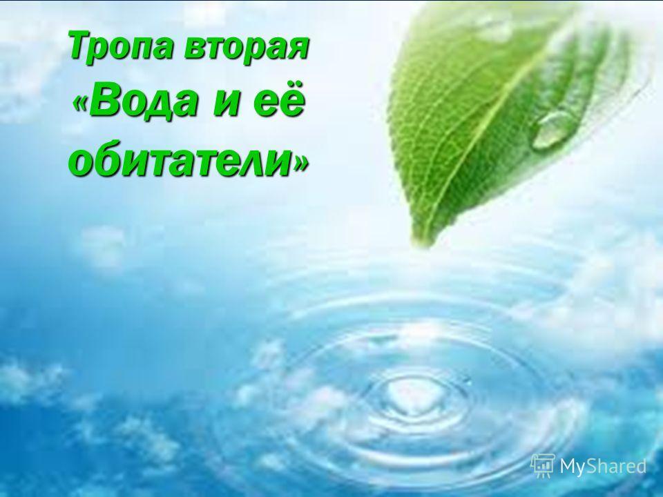 Тропа вторая «Вода и её обитатели»