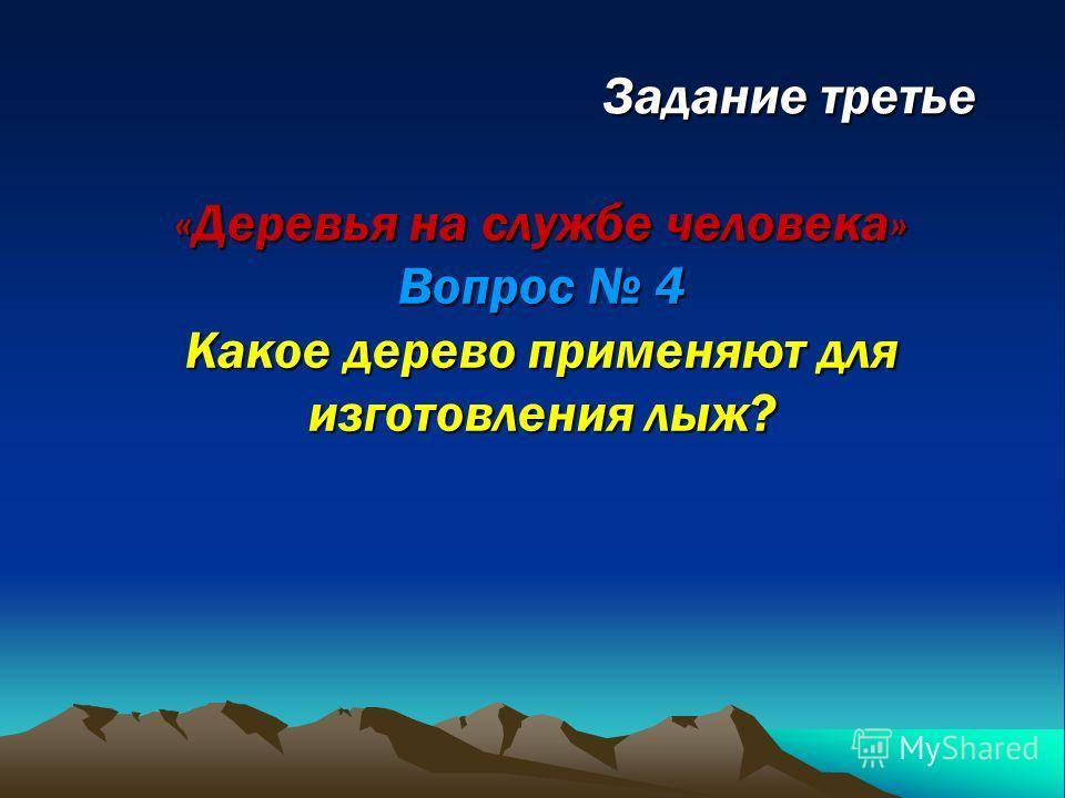 Задание третье «Деревья на службе человека» Вопрос 4 Какое дерево применяют для изготовления лыж?