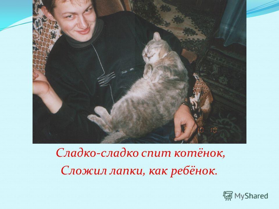 Сладко-сладко спит котёнок, Сложил лапки, как ребёнок.