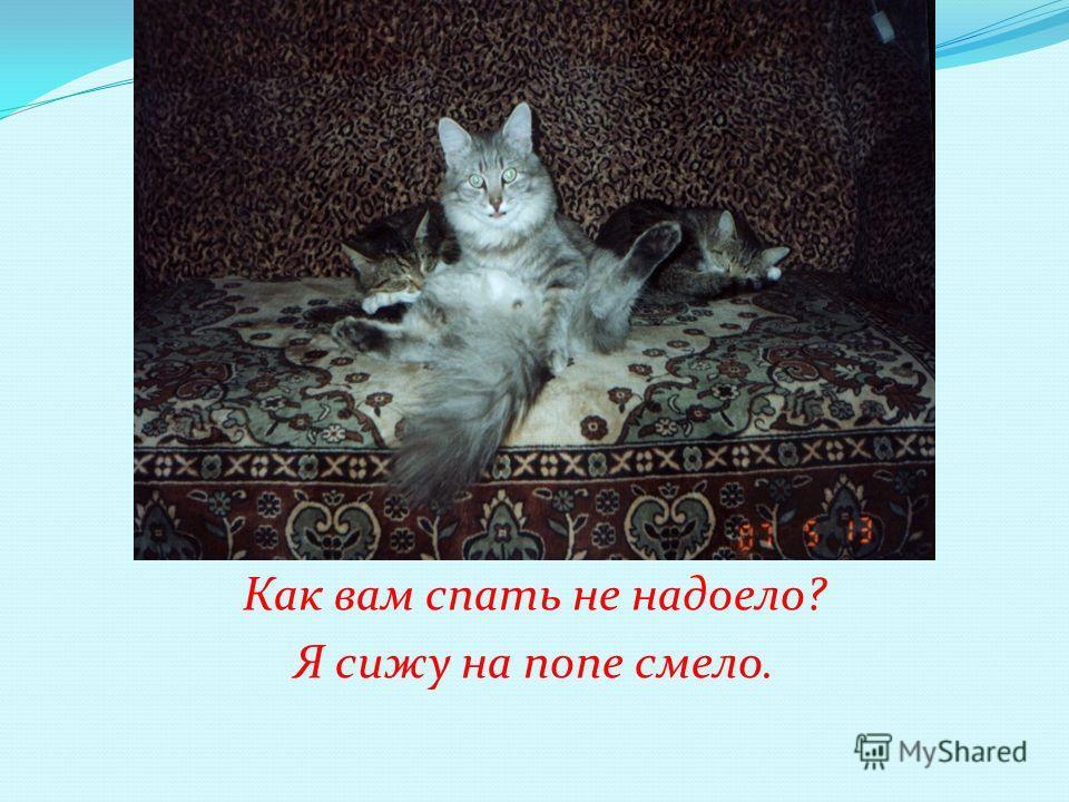 Как вам спать не надоело? Я сижу на попе смело.