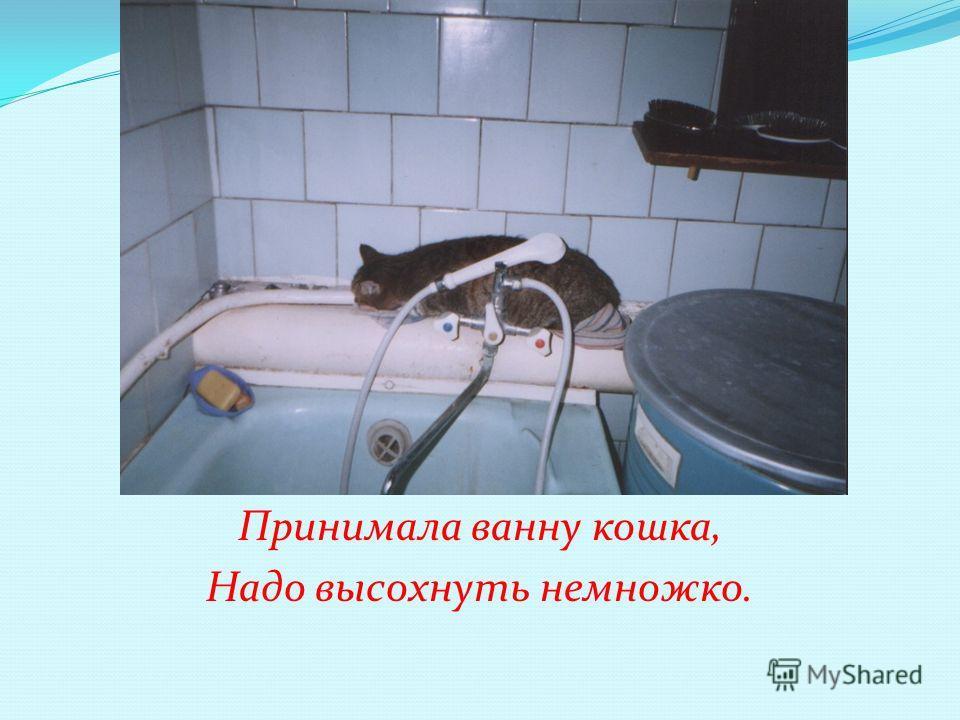 Принимала ванну кошка, Надо высохнуть немножко.