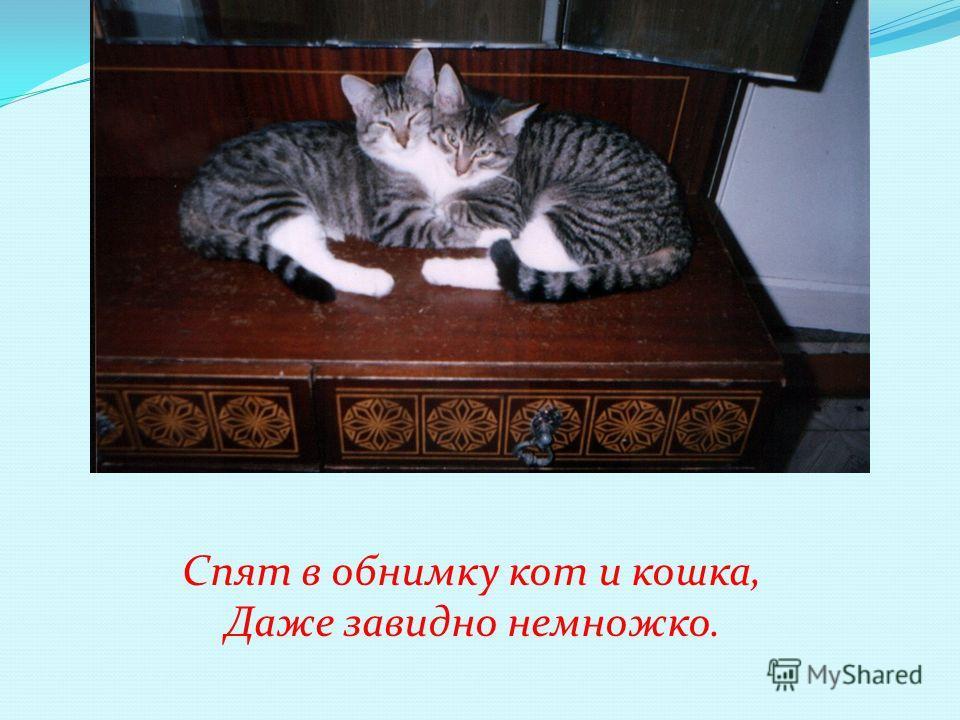 Спят в обнимку кот и кошка, Даже завидно немножко.