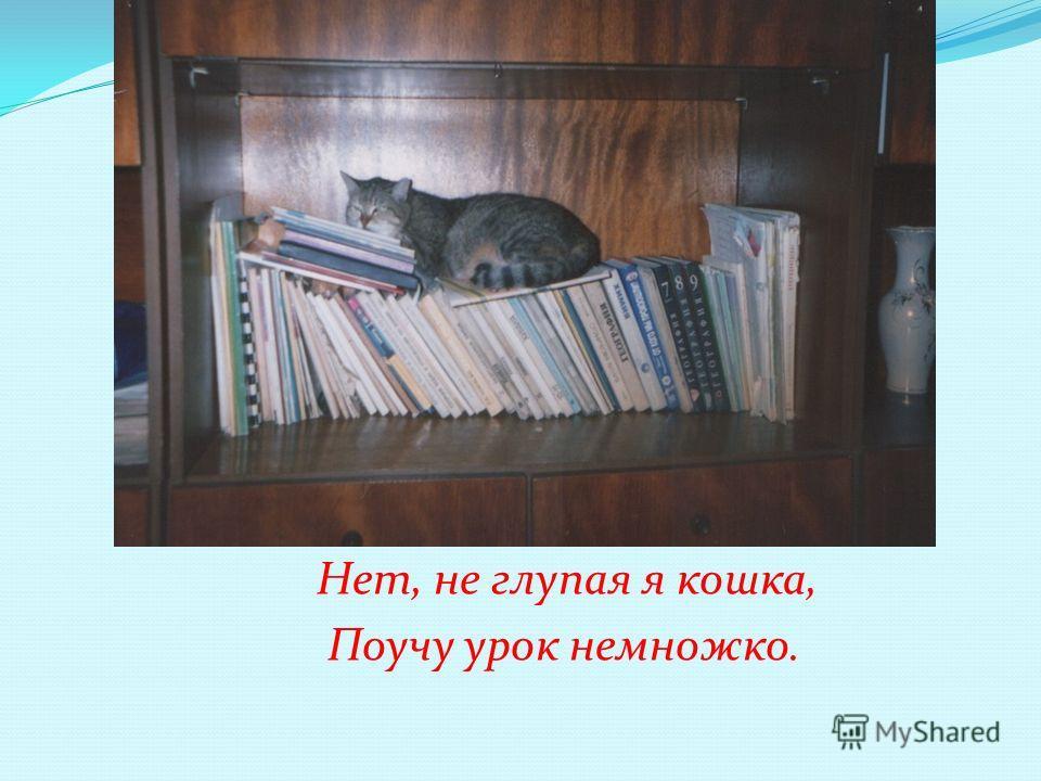 Нет, не глупая я кошка, Поучу урок немножко.