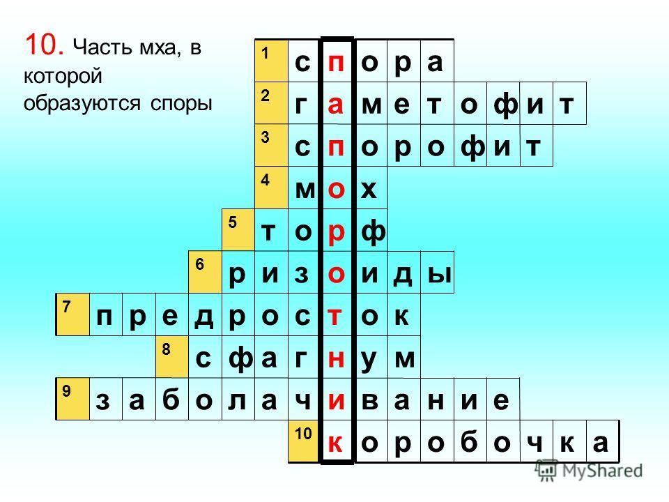 акчоборок еинавичалобаз 9 мунгафс 8 котсордерп 7 ыдиозир 6 фрот 5 хом 4 тифоропс 3 тифотемаг 2 аропс 1 10. Часть мха, в которой образуются споры