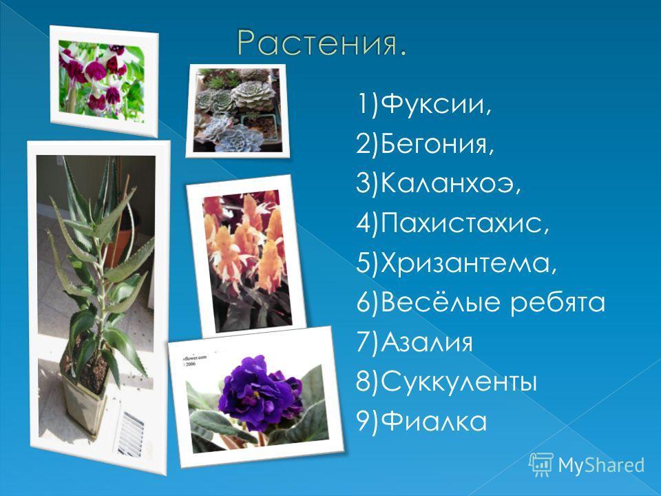 1)Фуксии, 2)Бегония, 3)Каланхоэ, 4)Пахистахис, 5)Хризантема, 6)Весёлые ребята 7)Азалия 8)Суккуленты 9)Фиалка