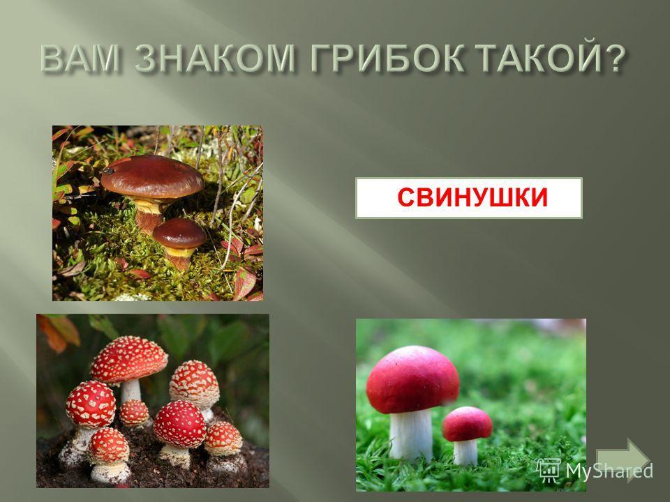 СВИНУШКИ
