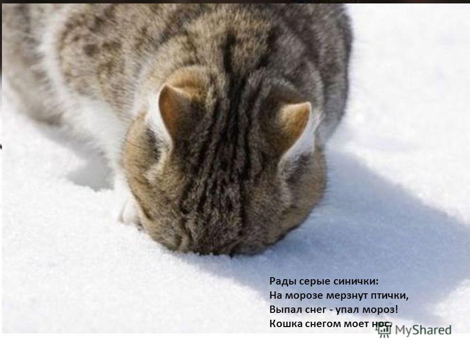 Рады серые синички: На морозе мерзнут птички, Выпал снег - упал мороз! Кошка снегом моет нос.