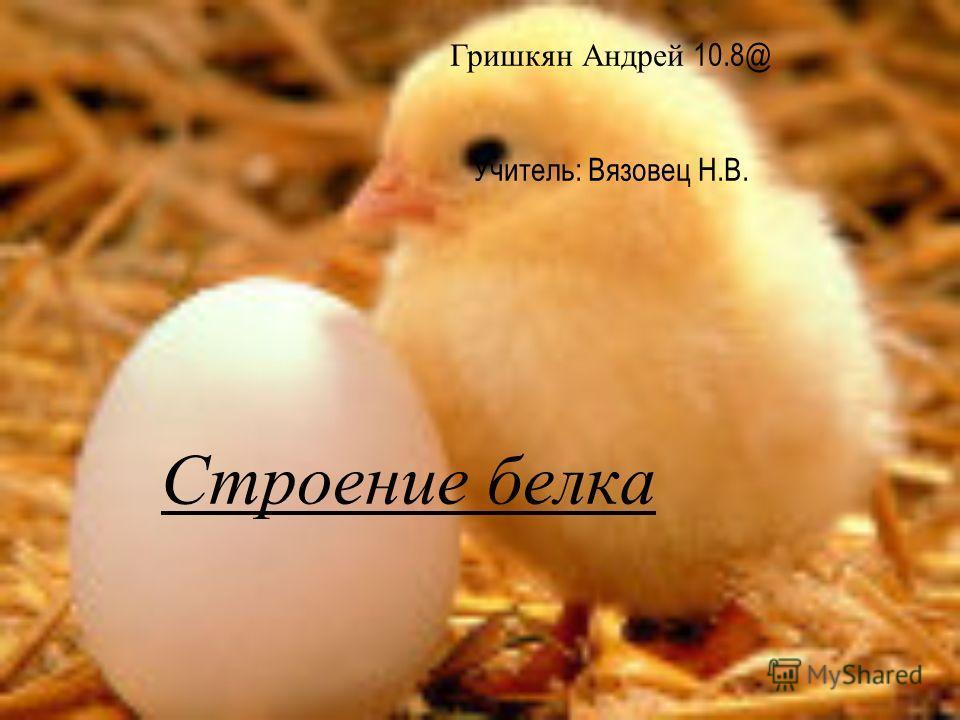 Строение белка Гришкян Андрей 10.8@ Учитель: Вязовец Н.В.