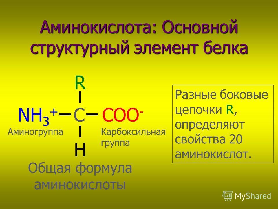 Аминокислота: Основной структурный элемент белка COO - NH 3 + C R H Общая формула аминокислоты Разные боковые цепочки R, определяют свойства 20 аминокислот. АминогруппаКарбоксильная группа