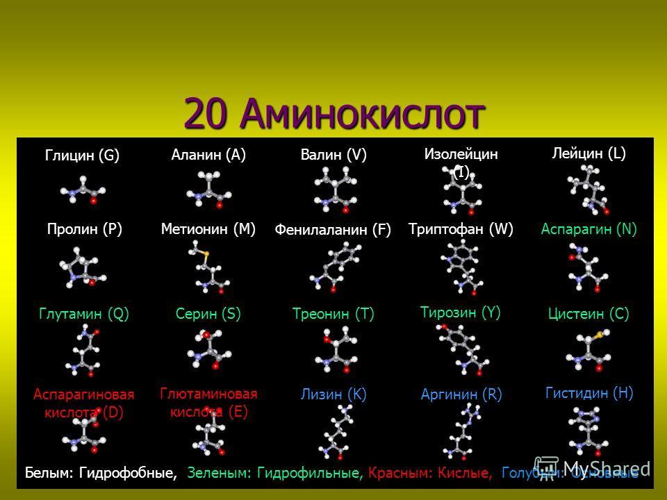 20 Аминокислот Глицин (G) Глютаминовая кислота (E) Аспарагиновая кислота (D) Метионин (M) Треонин (T) Серин (S) Глутамин (Q) Аспарагин (N) Триптофан (W) Фенилаланин (F) Цистеин (C) Пролин (P) Лейцин (L) Изолейцин (I) Валин (V) Аланин (A) Гистидин (H)