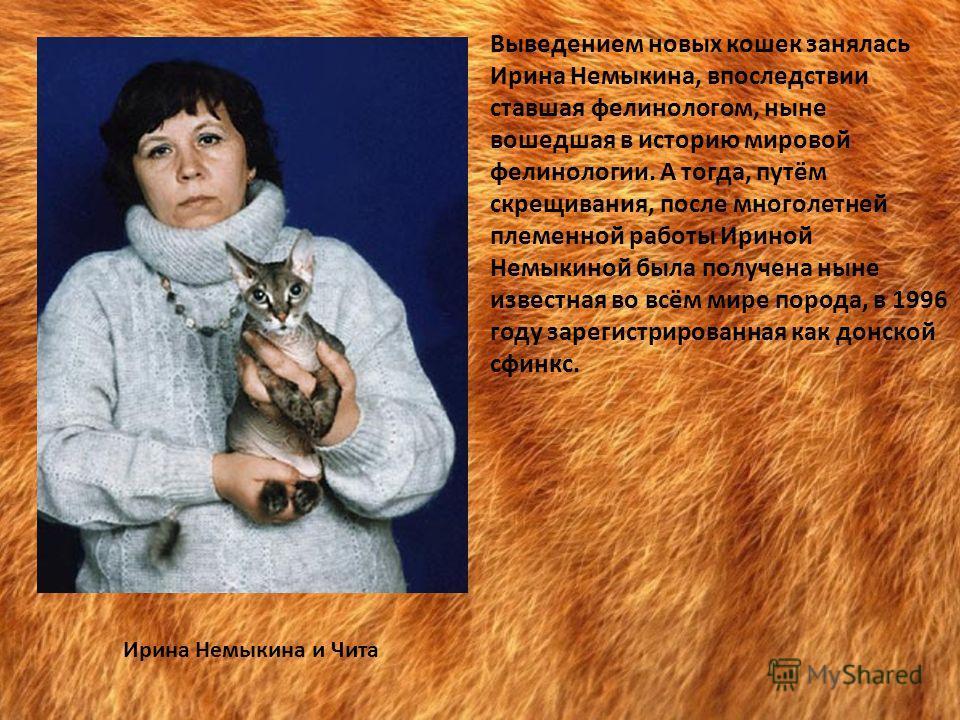 Выведением новых кошек занялась Ирина Немыкина, впоследствии ставшая фелинологом, ныне вошедшая в историю мировой фелинологии. А тогда, путём скрещивания, после многолетней племенной работы Ириной Немыкиной была получена ныне известная во всём мире п