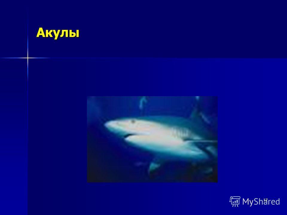 17 Акулы