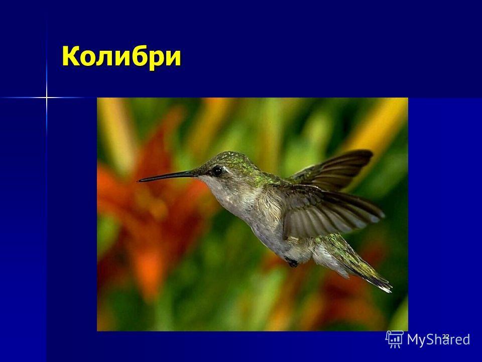 22 Колибри