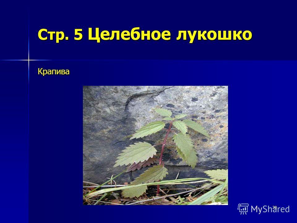 30 Стр. 5 Целебное лукошко Крапива