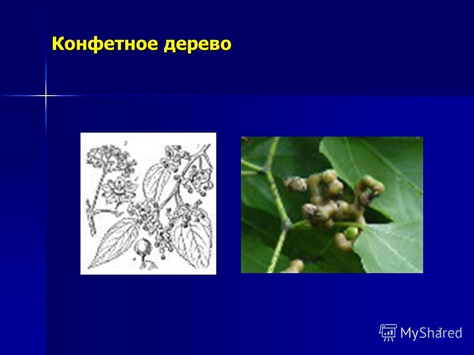 7 Конфетное дерево