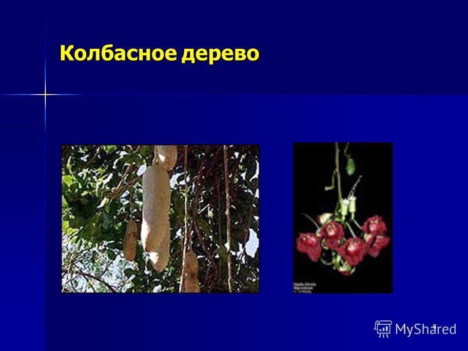 8 Колбасное дерево