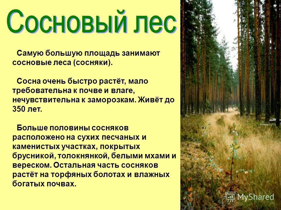 Самую большую площадь занимают сосновые леса (сосняки). Сосна очень быстро растёт, мало требовательна к почве и влаге, нечувствительна к заморозкам. Живёт до 350 лет. Больше половины сосняков расположено на сухих песчаных и каменистых участках, покры