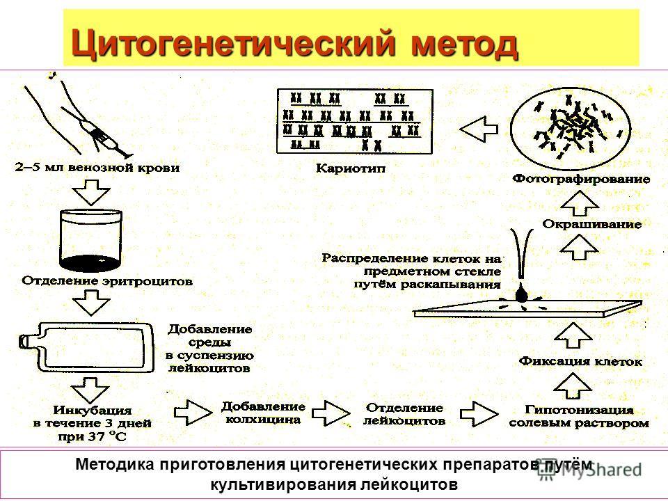Цитогенетический метод Методика приготовления цитогенетических препаратов путём культивирования лейкоцитов