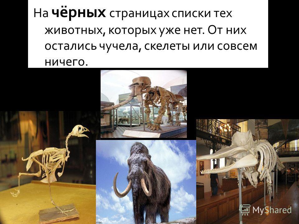 На чёрных страницах списки тех животных, которых уже нет. От них остались чучела, скелеты или совсем ничего.