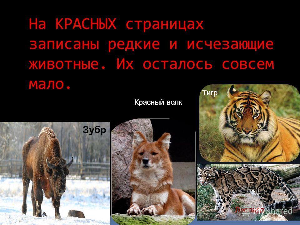 На КРАСНЫХ страницах записаны редкие и исчезающие животные. Их осталось совсем мало. Зубр Красный волк Тигр Леопард
