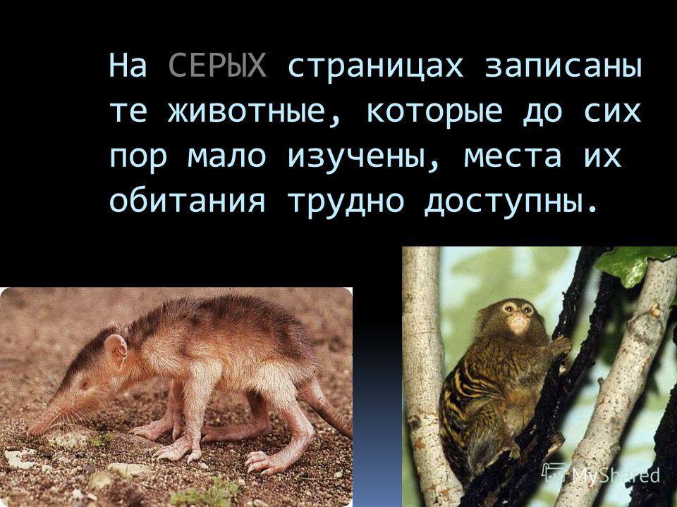 На СЕРЫХ страницах записаны те животные, которые до сих пор мало изучены, места их обитания трудно доступны.
