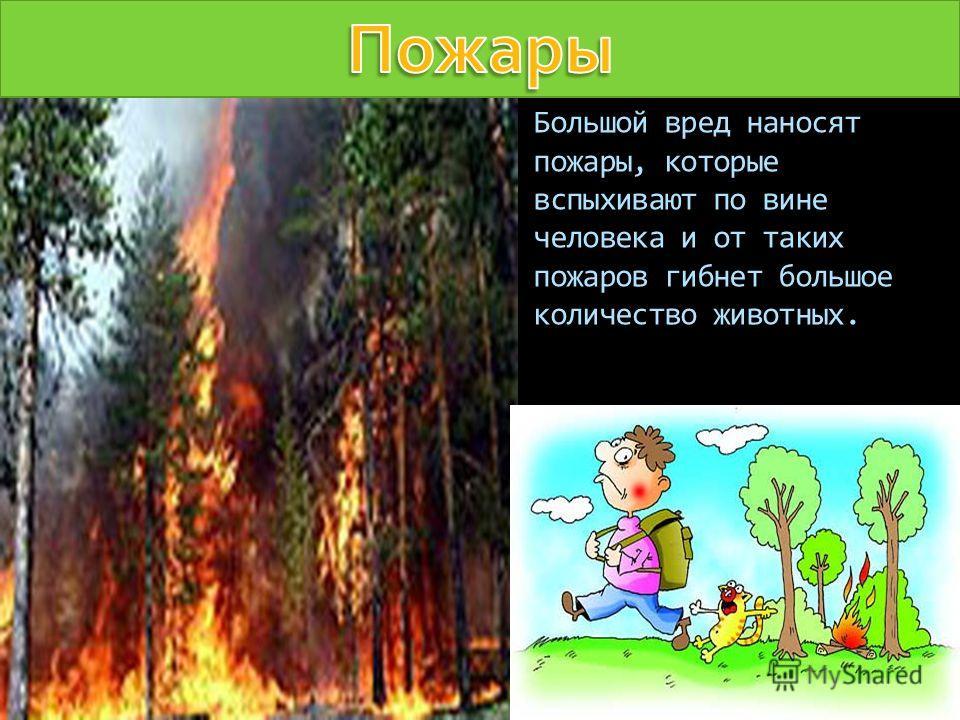 Большой вред наносят пожары, которые вспыхивают по вине человека и от таких пожаров гибнет большое количество животных.