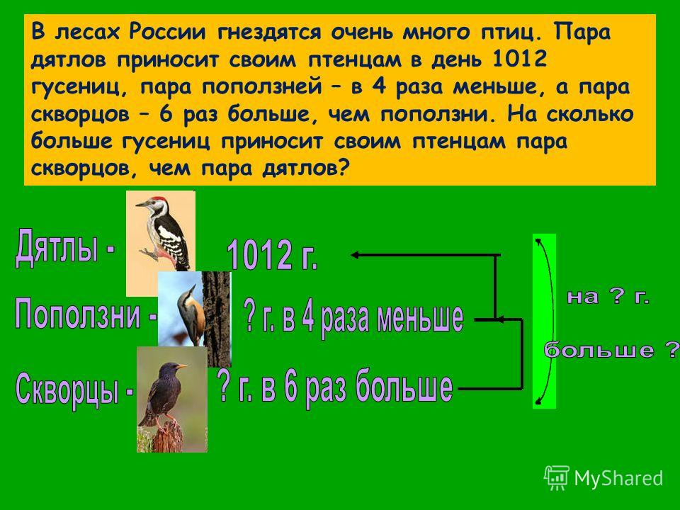 В лесах России гнездятся очень много птиц. Пара дятлов приносит своим птенцам в день 1012 гусениц, пара поползней – в 4 раза меньше, а пара скворцов – 6 раз больше, чем поползни. На сколько больше гусениц приносит своим птенцам пара скворцов, чем пар