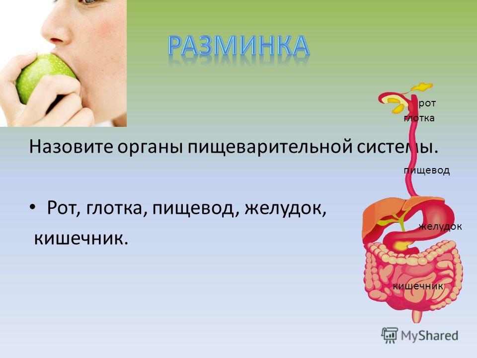 Назовите органы пищеварительной системы. Рот, глотка, пищевод, желудок, кишечник. рот глотка пищевод желудок кишечник