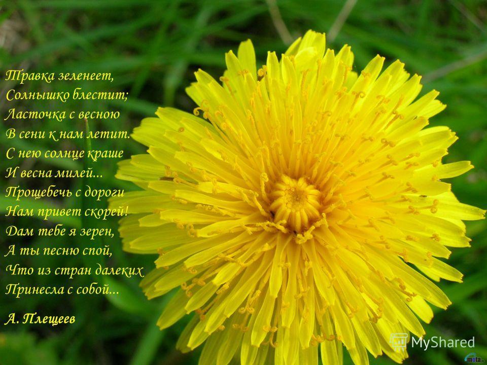 Травка зеленеет, Солнышко блестит; Ласточка с весною В сени к нам летит. С нею солнце краше И весна милей... Прощебечь с дороги Нам привет скорей! Дам тебе я зерен, А ты песню спой, Что из стран далеких Принесла с собой... А. Плещеев