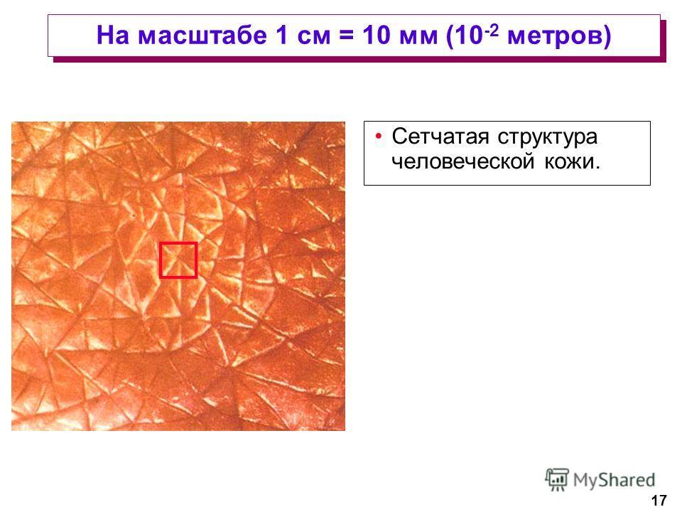 17 На масштабе 1 см = 10 мм (10 -2 метров) Сетчатая структура человеческой кожи.