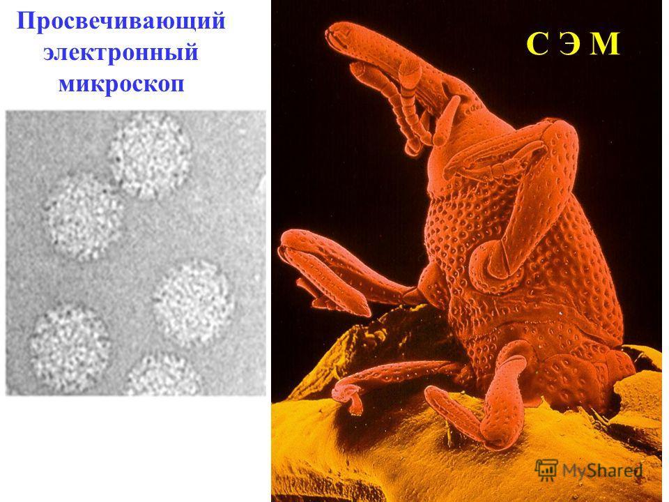 Просвечивающий электронный микроскоп С Э М