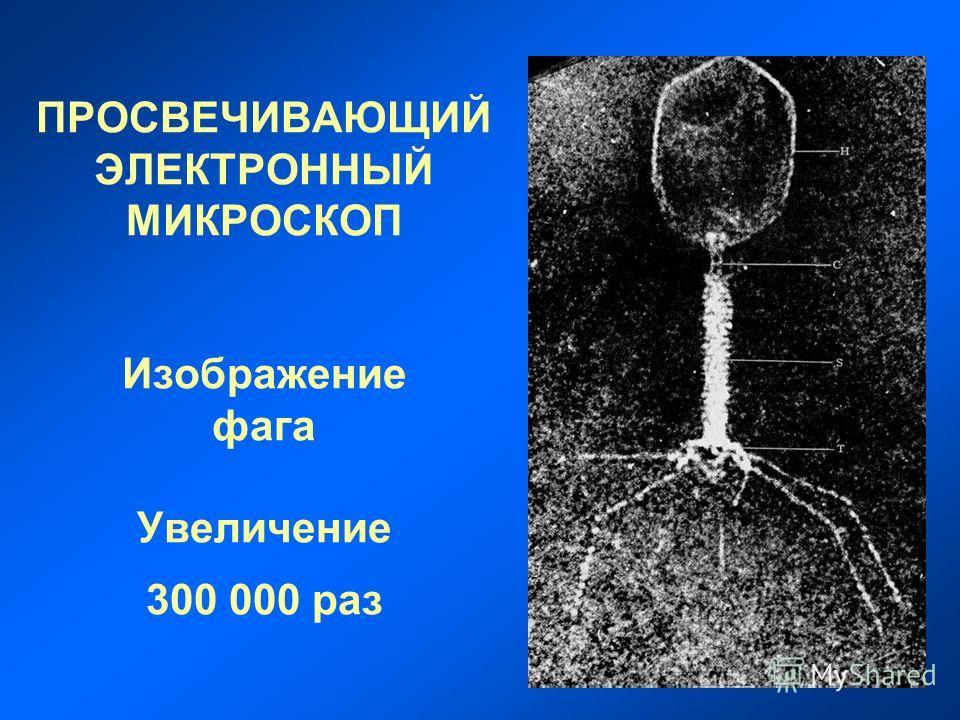 ПРОСВЕЧИВАЮЩИЙ ЭЛЕКТРОННЫЙ МИКРОСКОП Изображение фага Увеличение 300 000 раз