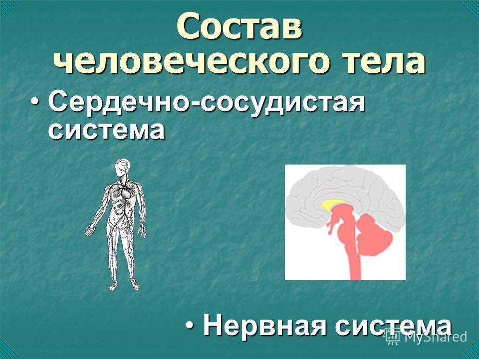 Сердечно-сосудистая системаСердечно-сосудистая система Состав человеческого тела Нервная системаНервная система
