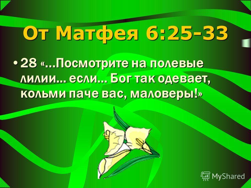 От Матфея 6:25-33 28 «...Посмотрите на полевые лилии... если... Бог так одевает, кольми паче вас, маловеры!»28 «...Посмотрите на полевые лилии... если... Бог так одевает, кольми паче вас, маловеры!»