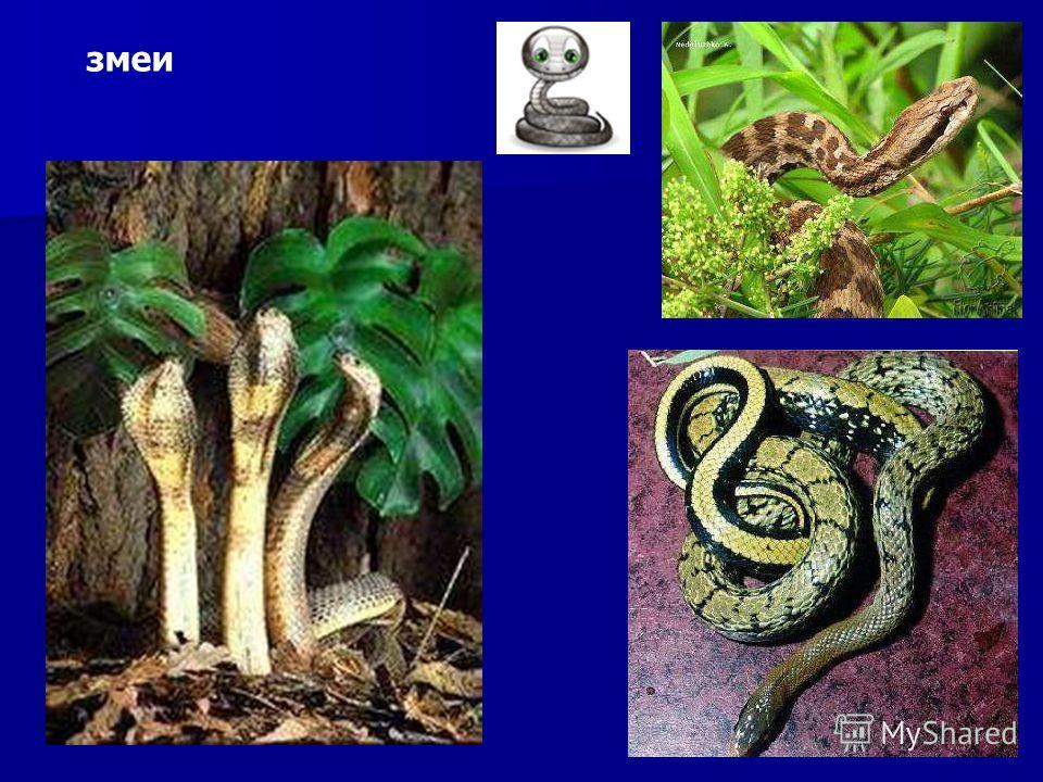змеи Змеи