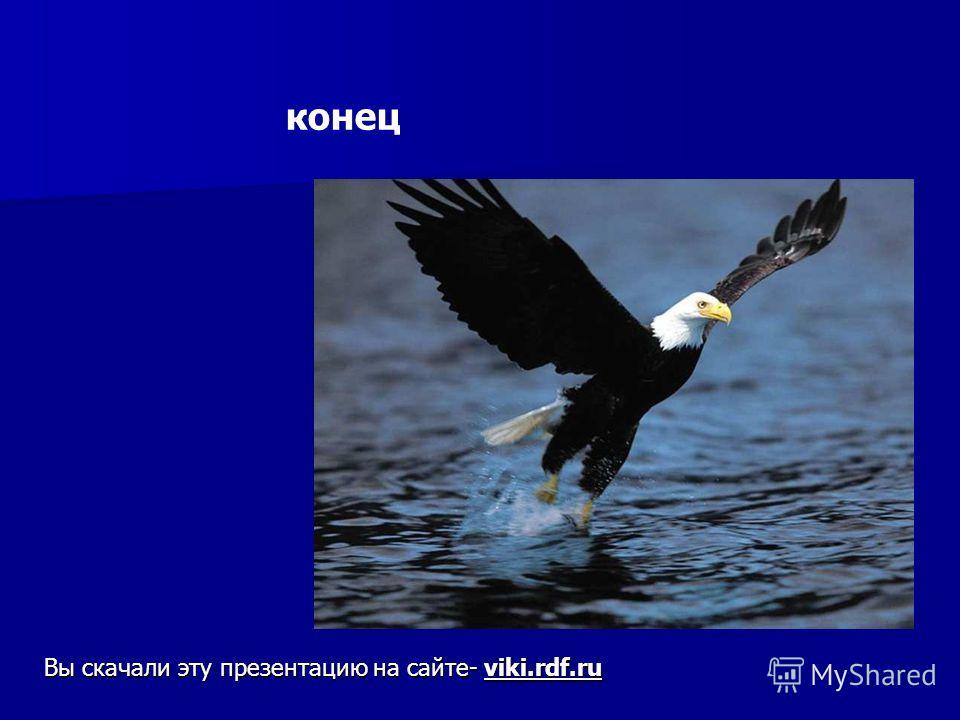 конец Вы скачали эту презентацию на сайте- viki.rdf.ru Конец вы скачали эту презентацию на сайте- viki.Rdf.Ru