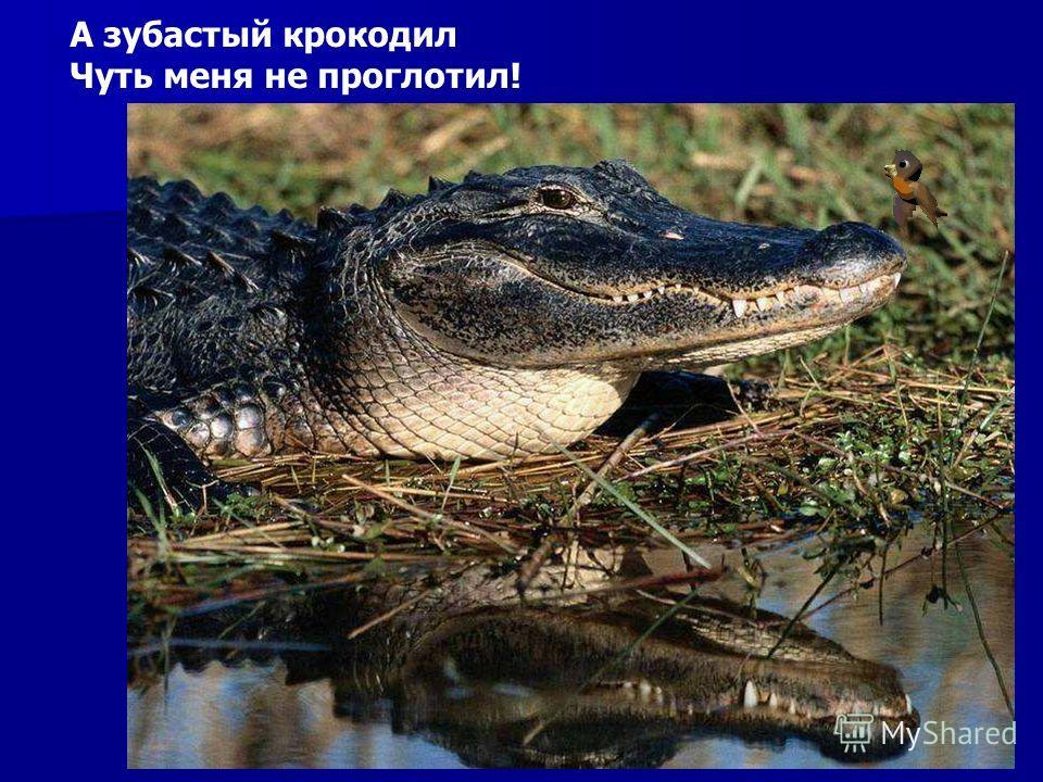 А зубастый крокодил Чуть меня не проглотил! А зубастый крокодил чуть меня не проглотил!