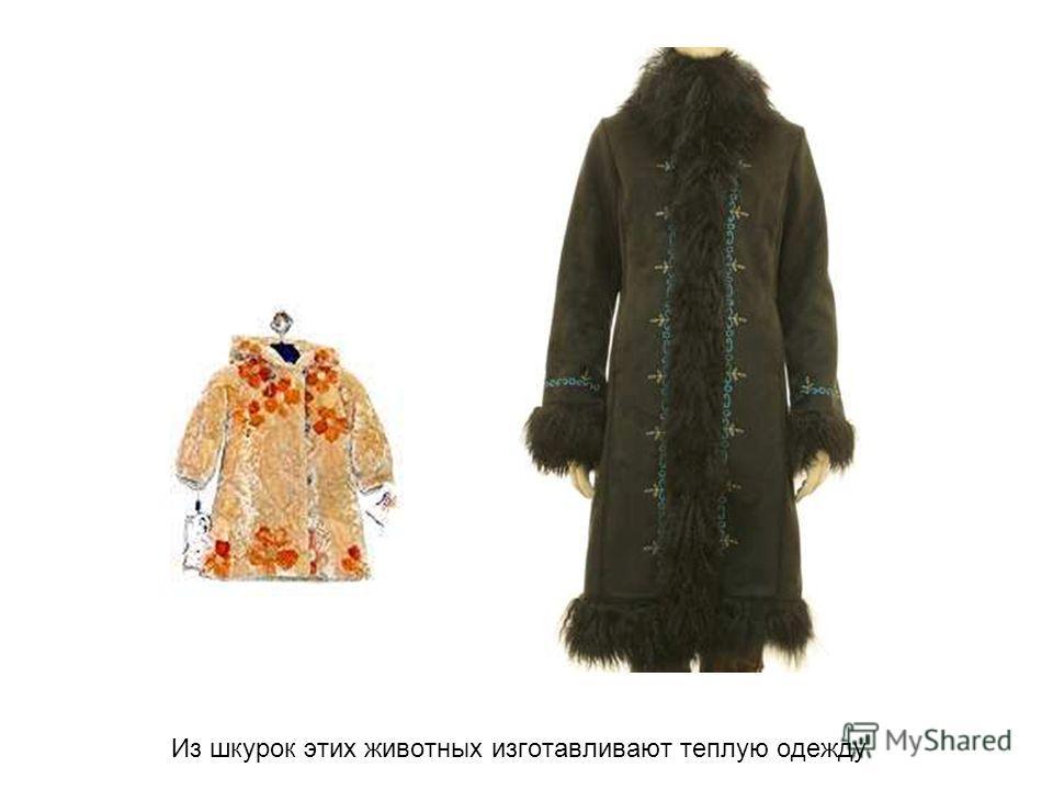 Из шкурок этих животных изготавливают теплую одежду