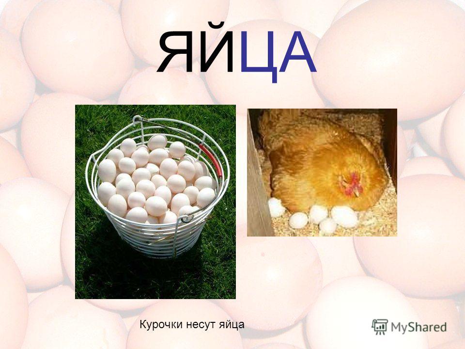 ЯЙЦА Курочки несут яйца