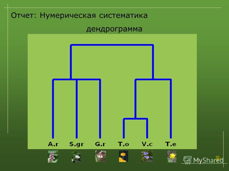 Отчет: Нумерическая систематика дендрограмма
