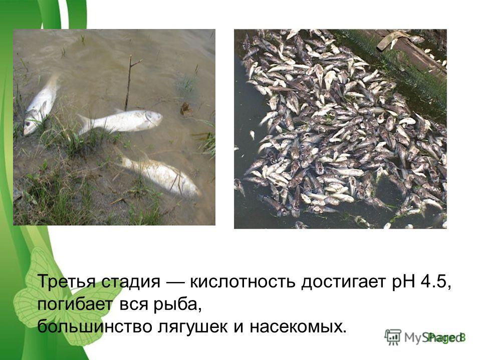 Free Powerpoint TemplatesPage 8 Третья стадия кислотность достигает рН 4.5, погибает вся рыба, большинство лягушек и насекомых.