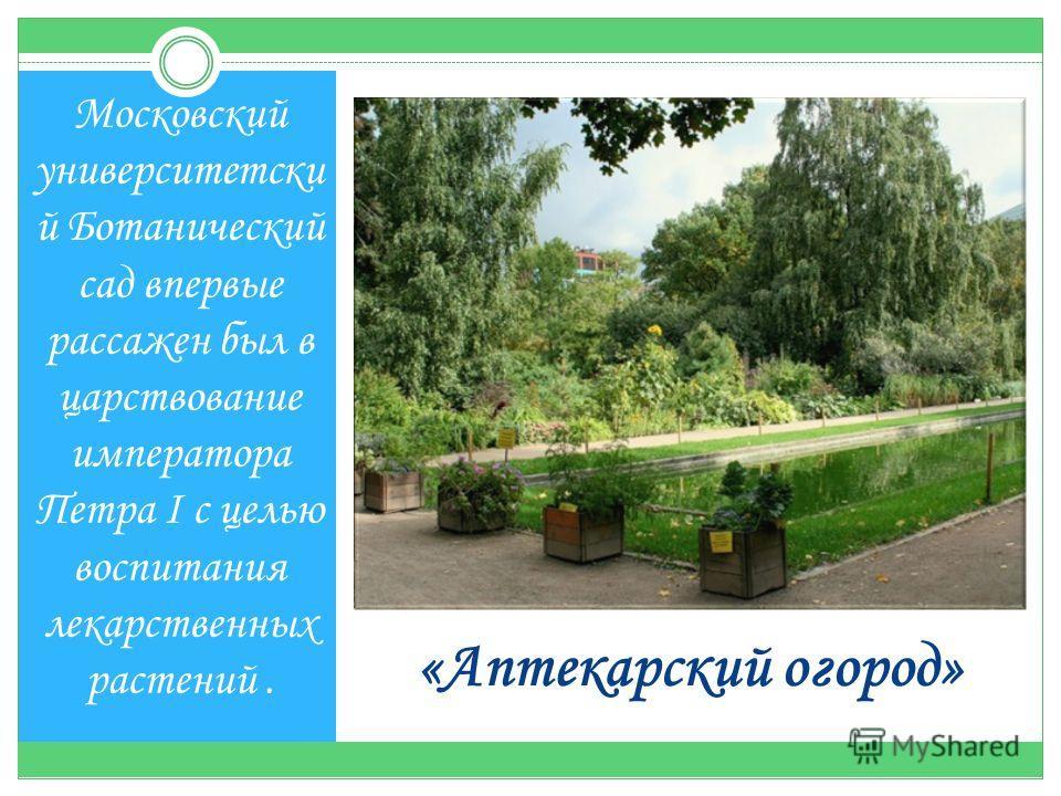 «Аптекарский огород» Московский университетски й Ботанический сад впервые рассажен был в царствование императора Петра I с целью воспитания лекарственных растений.